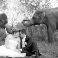 African Lion Safari Wedding