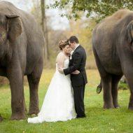Wedding photo at African Lion Safari